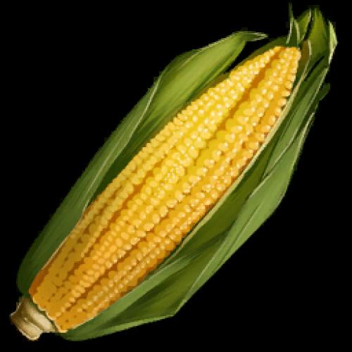 Кукуруза. Семена кукурузы Longrass Seed