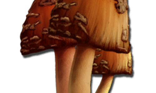 Редкий Гриб Rare Mushroom