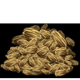 Rockarrot_Seed