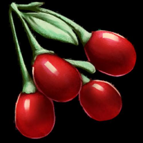 Ягоды Тинтоберри. Семена Tintoberry Seed