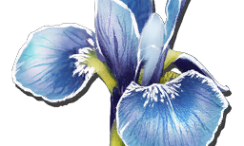 Редкий Цветок Rare Flower