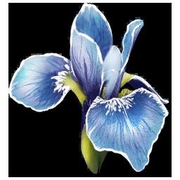 Rare_Flower